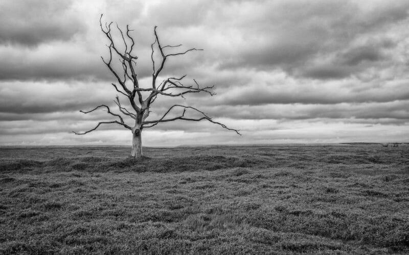 photo arbre noir et blanc