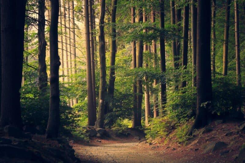 belle photo de forêt